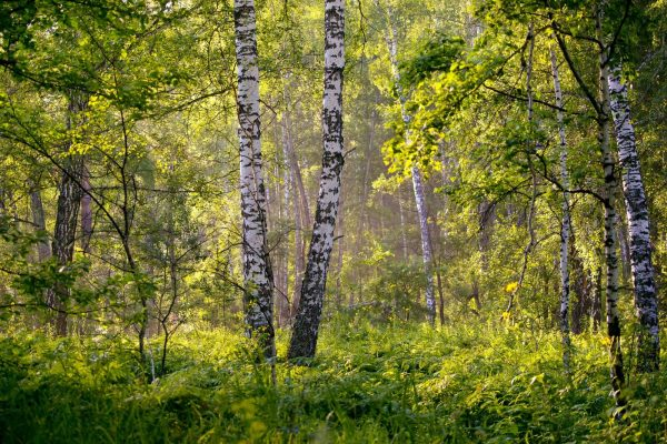 candonian-forest-3